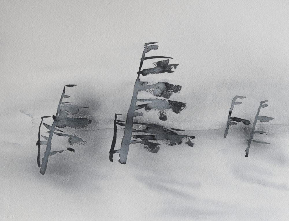 Furu i vind (38 x 53 cm) 7100 kr